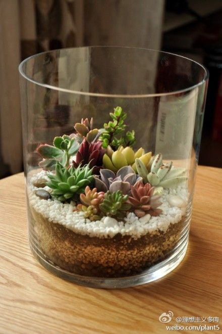 simple-terrarium